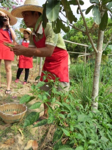 Thai Farm garden